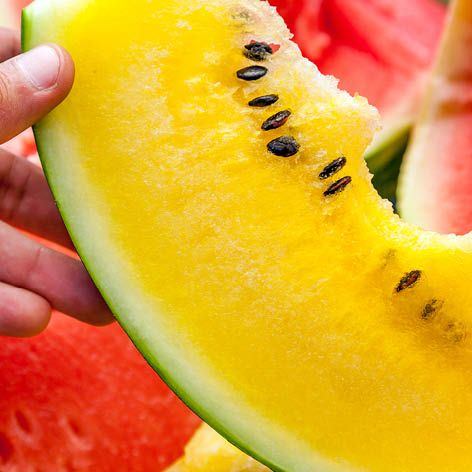 All_you_need_to_know_about_..._yellow_watermelon.jpg